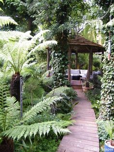 © J And S Scapes - Walkway In Tropical Garden