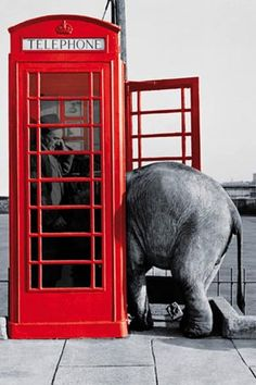 splash of red- might not be room to answer he phone         i.e. how many elephants does it take to make a phone call?
