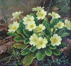 Jan Voerman jr. (Dutch, 1890-1976) - Primrose, oil on panel, 16 x 17 cm. 1951.
