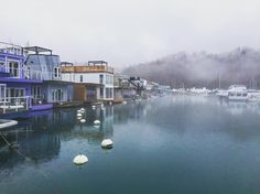 It's a foggy day at Bluffer's Park Marina -  @amygrief by blogto Scarborough Bluffs, Park, Instagram Posts, Parks