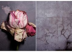 :: Iris VELGHE :: Bloom Magazine, Pinking Shears, Still Life, Iris, Images, Texture, Photography, Painting, Inspiration