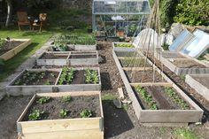 New Fruit, Grow Organic, Organic Recipes, 1 Year, Corner, Bed, Garden, Plants, Garten
