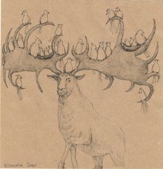 Animal ink sketch MOOSE // original pen drawings by elisavetasivas