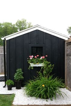 Come see this old tired shed transformed into a chic black look for less than $200 with paint, plants, and landscaping rocks. #shed #gardenshed #outdoorliving #background #nestingwithgrace #diyprojects