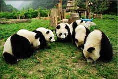 Wait... this isn't bamboo.