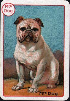 DOG+Bulldog+Bull+Mom,+Nice+Victorian+Swap+Playing+Card+