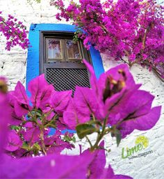 BODRUM COLORS