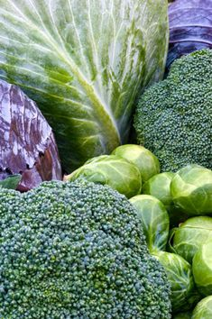 Growing Tips for Cabbage & Other Brassica | Rodale's Organic Life