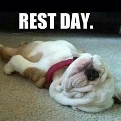 Exactly how I feel on Rest Day...except that Jillian doesn't GIVE YOU ONE IN THE STINKIN 30 DAY SHRED RAAAAAAAAAR. But if I DID have a rest day, this is what I'd be doing. humph.
