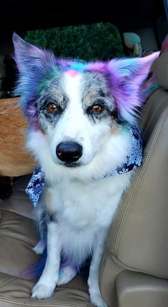 🤩Colorful dog dyed with OPAWZ Semi-Permanent Pet Hair Dyes. The safe formula for Cats & Dogs. Gradually washes away in around 8 baths. Thank you Sarah Engel for sharing this cute design with us. Dog Hair Dye, Dog Dye, Dyed Hair, Baby Animals Pictures, Cute Animals, Rainbow Dog, Semi Permanent Hair Dye, Creative Grooming, Pet Grooming