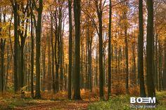 FOREST ELEMENTS-AUTUMN FOREST