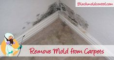 Black mold on or under your carpet. Can you clean and remove this mould without damaging the carpet? Learn how to locate, remediation and prevention! Clean Black Mold, Remove Black Mold, Remove Mold, How Do You Clean, How To Clean Carpet, How To Remove, Cleaning Mold, Cleaning Hacks, Rugs On Carpet
