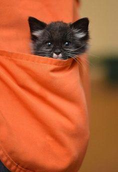 cat in the orange pocket