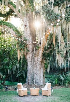 Lightbulbs in Spanish moss drenched trees // Aaron and Jillian Photography Southern Weddings, Unique Weddings, Real Weddings, Midsummer Nights Dream, Wedding Ceremony Decorations, Wedding Vendors, Charleston, Wedding Photos, Wedding Photography
