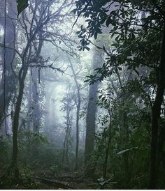 """Misty & mysterious.  """"I've been fascinated by the #rainforest for as long as I can remember and this trip has been awe-inspiring at every turn. Even a simple treescape like this is unbelievably breathtaking"""" via @benjamichael! #CostaRicaExperts #CostaRica"""