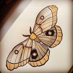 Moth study I like them so much better than butterflies. Traditional Butterfly Tattoo, Traditional Tattoo Design, Traditional Tattoo Painting, Traditional Tattoo Drawings, Moth Tattoo Design, Tattoo Designs, Tattoo Fonts Generator, Borboleta Tattoo, Moth Drawing
