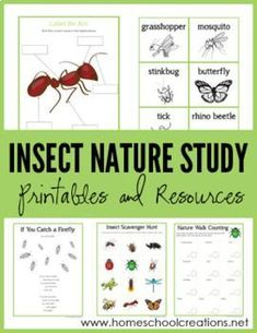 Nature Study Printables - Learning About Bugs Insect Nature Study Printables - Learning About Bugs. A set of free printables from Homeschool CreationsInsect Nature Study Printables - Learning About Bugs. A set of free printables from Homeschool Creations Homeschool Kindergarten, Homeschool Curriculum, Catholic Homeschooling, Homeschooling Resources, Homeschooling Statistics, Preschool Teachers, Kindergarten Reading, Preschool Ideas, Teaching Science
