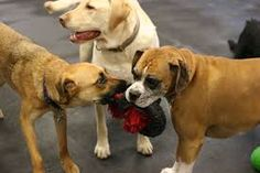 Dog daycares are a concern...particularly if toys are shared. They can be fun places, but not for right now throughout much of the Chicago area