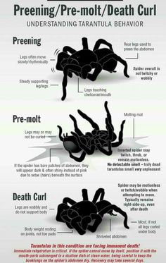 ♥ Small Pet Care ♥ I miss my tarantulas!  When Stryker gets older, I'm going to buy him several different kinds like I used to have.
