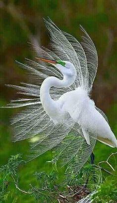 Animals Got Their Revenge On Poachers on Top story Rare Birds, Exotic Birds, Colorful Birds, Exotic Pets, Pretty Birds, Beautiful Birds, Animals Beautiful, Bird Pictures, Animal Pictures