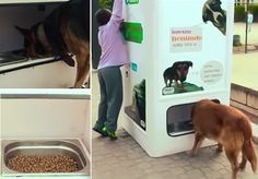 Ação ajuda a alimentar cães e  gatos de rua ao mesmo tempo em que estimula a reciclagem