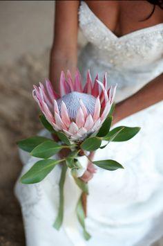 Pink King Protea Bouquet