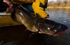 How to Catch Monster Channel Catfish | Field & Stream