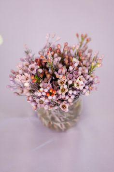 Geraldton wax. My favourite flowers.