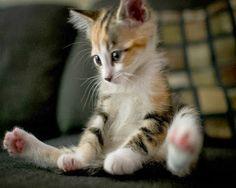 Adorable #kitten.