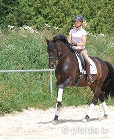 sitzschulung-besser-sitzen-lernen Equestrian, Riding Helmets, Pony, Horses, Sports, Animals, Fit, Island Horse, Rib Cage