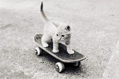Kitty!!