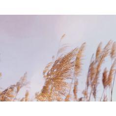 Promenade de fin de journée ✨ . . . . . #dogwalk #365joursdinspiration #atelierinstagratitude @annesolange.tardy #promenade #balade #nature #etang #goldenhour #promenerlechien #sunset #goingforawalkwiththedog #naturelover #naturewalk #naturebeauty #goldenhourlight #goldenhourwellness #swiss #swissblogger #swissinfluencer #swissinstagramer Walking In Nature, Dog Walking, Gratitude, Golden Hour, Sunset, Instagram, Outdoor, Atelier, Ride Or Die
