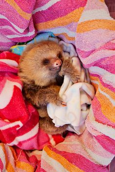 Why has no one bought me a sloth yet?                                                                                                                                                                                 More