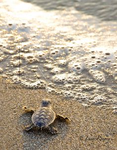 Nice photo...I love me some sea turtles! This photographer is at Artigras this year.