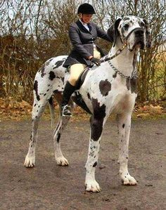 5 Biggest Dogs You have Ever Seen: Biggest Dogs, Huge Dogs, Danville Dogs, Dog Cat, Pets Animals Veterinary, Magia Photoshop A, Biggest Animal, Big Dogs