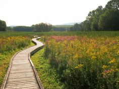 Your journey begins with an easy, level stroll along the Pochuck Boardwalk.