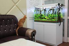 Hungry ? #aquascape #livingroom Pin by Aqua Poolkoh