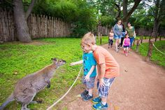 The 40-acre Roger Williams Park Zoo is one of the oldest zoological parks in the nation home to more than 100 species of animals and is now our Readers' Choice winner for Best Rhode Island Attraction. Visitor favorites include a Komodo dragon red pandas zebras African elephants harbor seals and sloths.   See what attractions are the best in your state! Click on the link in the bio! . . . #travel #traveling #traveler #outdoors #adventure #explore #RhodeIsland #instatravel #travelgram…