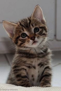 Ahh - Cute Cats Breeds In India #view