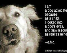 Dog Rescue - consider fostering a shelter dog - adopt from your local shelter, don't shop!