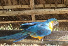 The Archidona Zoo is a great way to take a beautiful walk through the jungle and see some beautiful birds and animals. Blue Macaw, Beautiful Birds, Ecuador, Wildlife, Animals, Animales, Animaux, Animal, Animais