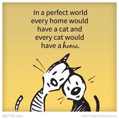What a purrrffect world it would be!  . #MUTTS #MUTTSofinstagram #dogstagram #catstagram #petstagram #dogs #cats #animallover #vegan#cats #foreverhomes
