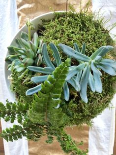 succulent brunch centerpiece - Google Search