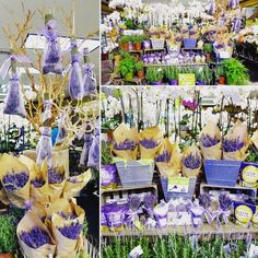 Lavender Love @ Gelson's Pacific Palisades