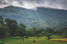 Paddy Fields Close to Balangoda #5 by Son-of-the-Morning-Light #ErnstStrasser #SriLanka