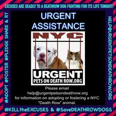 FOR HELP SAVING A #DeathrowDog  EMAIL THE HELP DESK!  SERIOUS #ADOPTERS & #FOSTERS ONLY!  https://www.facebook.com/Urgentdeathrowdogs/photos/a.611290788883804.1073741851.152876678058553/933078276705052/?type=3&theater…