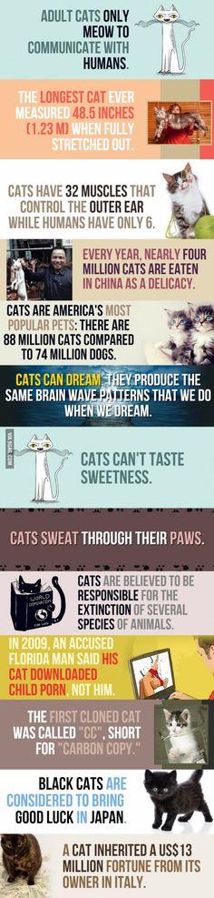 #13 Cat Facts