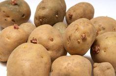 1218 なぜ?スーパーのジャガイモは発芽してないのか? 編集 いつも芽が出かかっているジャガイモに疑問を覚え、自然食のオジサンに訊ねてみた。  私「どうして、ジャガイモいつも芽が出てるんですか?」  オジ「ジャガイモの芽が出ないのは、不自然なんだよ。」  私「不自然?」  オジ「どうして、スーパーのジャガイモが、いつもツルツルか知ってる?」  私「えっ?知らないです。」  オジ「放射能を浴びせているからなんだ」
