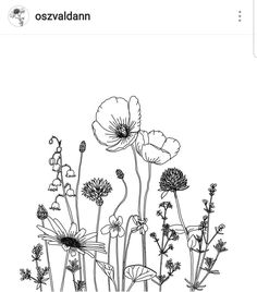 Watercolor Flowers Discover garden drawing Illustration by oszvaldann Realistic Flower Drawing, Simple Flower Drawing, Easy Flower Drawings, Beautiful Flower Drawings, Drawing Flowers, Poppy Drawing, Flor Tattoo, Wildflower Drawing, Illustration Blume