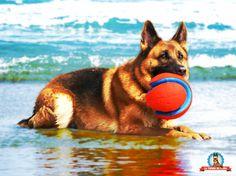 3 Formas Sencillas de Tener Perros Felices y Sanos / Juega Con Tu Perro